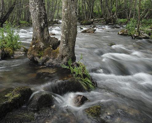 Rio Baceiro (Terroso).